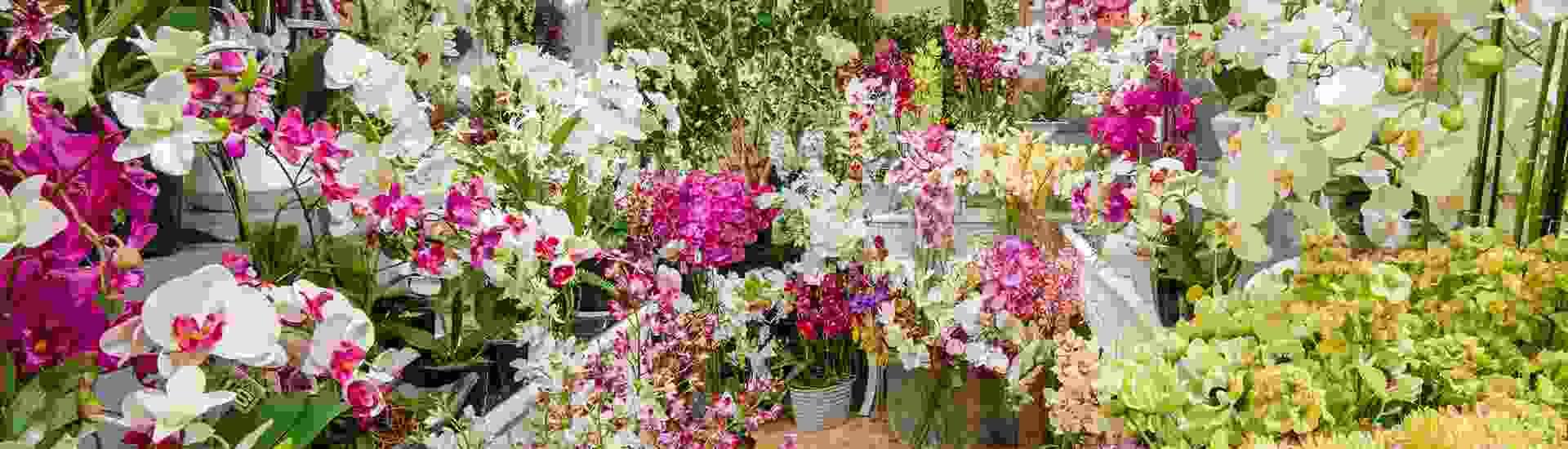 Swift Imports Flowers